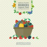 Banner with fresh berries and fruits. Concept organic food. Banner with different berries in basket and place for text. Concept organic farm fresh food. Vector stock illustration