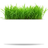 Banner with fresh grass Royalty Free Stock Photos