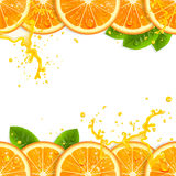 Banner with Fresh Oranges Stock Photos