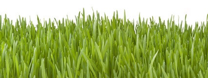 Banner Green Grass Background