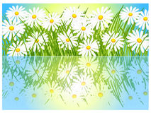 Banner with grass and daisies. Banner with grass and daisies beautiful illustration Stock Images