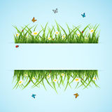 Banner with grass and flower. Abstract blue background with flowers, butterflies and ladybugs, illustration Stock Image