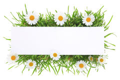 Banner with grass and flowers Royalty Free Stock Images