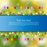 Banner with grass and flowers Stock Photos