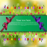 Banner with grass and flowers Royalty Free Stock Photography