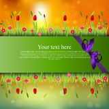 Banner with grass and flowers Stock Photography