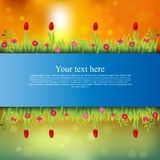 Banner with grass and flowers Royalty Free Stock Photos