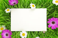Banner on grass, pink and white flowers Stock Photo