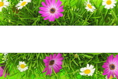 Banner on grass Stock Photos