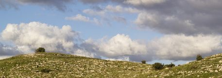 Banner -Green fields and the Samarian Hills landscape in the spring,. Banner - Green fields and the Samarian Hills landscape in the spring,Sunny Day, Israel Royalty Free Stock Photos