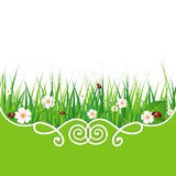 Banner with green grass Royalty Free Stock Image