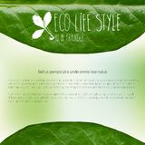 Banner with green leaves and doodles Stock Images