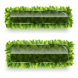 Banner with green leaves. Vector banner of green leaves with glass plate for your text on white background stock illustration