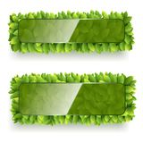 Banner with green leaves Royalty Free Stock Photography