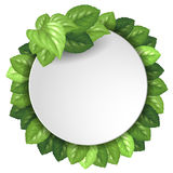Banner with green leaves Stock Photos