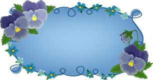 Banner or greetings card with pansies Stock Images