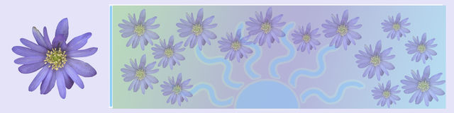 Banner/header Sweet pink flowers. A lovely spring banner in blue purple tones with room for text. The flowers are anemones Stock Photography