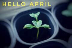 Banner hello april. Hi spring. Hello April. Welcome card We are waiting for the new spring month. The second month of spring royalty free stock images