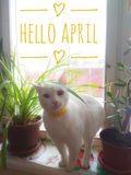 Banner hello april. Hi spring. Hello April. Welcome card We are waiting for the new spring month. The second month of spring royalty free stock photos