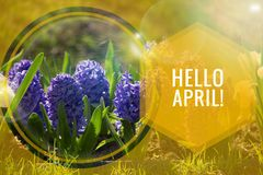 Banner hello april. Hi spring. Hello April. Welcome card We are waiting for the new spring month. The second month of spring stock image