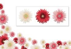 banner kwiat Zdjęcie Stock