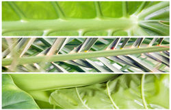 Banner large leaf Stock Images