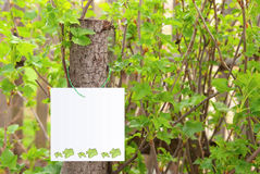 A banner on leaf background Stock Photo