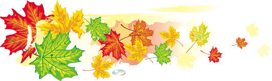 Banner from maple leaves Royalty Free Stock Photos