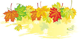 Banner from maple leaves_3 Royalty Free Stock Photo