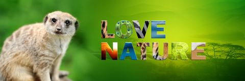 Meerkat with text Love Nature. Banner with meerkat and text Love Nature with texture Royalty Free Stock Photo