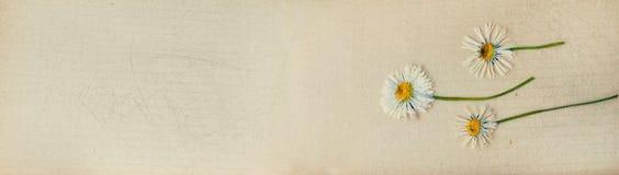 Banner met botanisch ecoontwerp - het malplaatje van de Webkopbal Royalty-vrije Stock Afbeelding