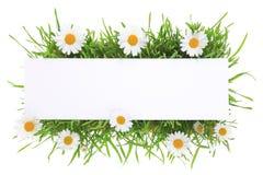 Banner met gras en bloemen royalty-vrije stock afbeeldingen