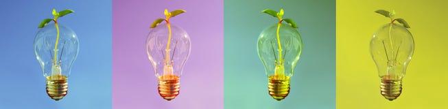 Banner met lightbulbs, Vers idee voor gezonde en duurzame ontwikkeling, Glanzende Lightbulb met kleine installatie die doorkomen stock foto