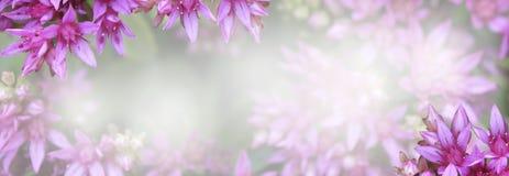 Banner met roze bloemen stock foto's