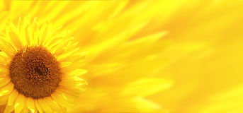 Banner met zonnebloem stock foto