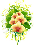 Banner with orchid. Royalty Free Stock Photo