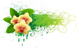 Banner with orchid. Royalty Free Stock Photos