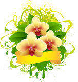 Banner with orchid. Stock Image