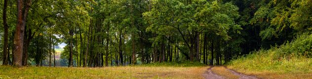 Free Banner. Panorama Of The Forest In Early Autumn. The Dirt Road Goes To The Forest Royalty Free Stock Images - 214535149