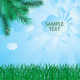 Banner from pine branches Royalty Free Stock Image
