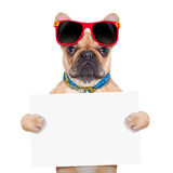 Banner placard dog Royalty Free Stock Photos