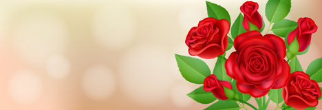 Banner with red rose and leaf. Horizontal banner with red rose, bud and leaf for love message, and wedding invitation Royalty Free Stock Photos