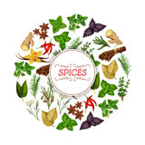 Banner for seasoning, herb or spice food. Spice food or seasoning, herb banner. Vanilla and cinnamon, flat-leaved rosemary and star anise, red chili pepper and Stock Photos