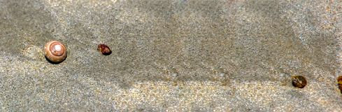 Banner size,Sandy beach with beautiful shells on the sand royalty free stock images