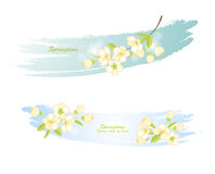 Banner with spring flowering branches Royalty Free Stock Photo