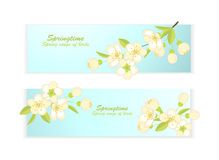 Banner with spring flowering branches Stock Photos