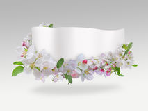 Banner with spring flowers Stock Photos