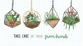 Banner with succulents, cactuses and other plants growing in hanging glass vivariums or florariums and Take Care Of Your. Green friends. Home decor in modern stock illustration