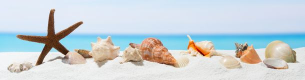 Free Banner Summer Background With White Sand.  Seashell And Starfish On The Beach Stock Image - 147506951