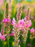 banner tła kwiaty form różowego spiralę trochę Obrazy Stock